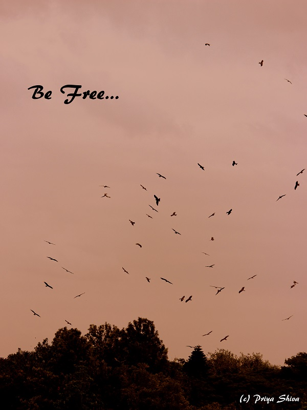 Be free Bird photography